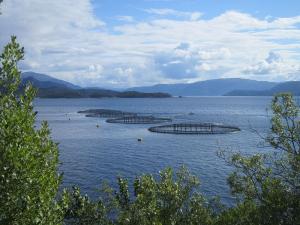 Foto delle gabbie per l'allevamento dei salmoni nelle acque di un fiordo norvegese