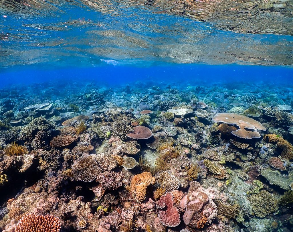 Great Barrirer Reef